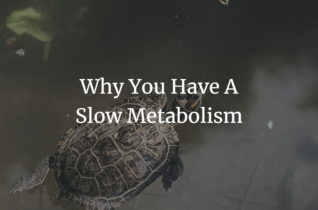 Why You Have A Slow Metabolism